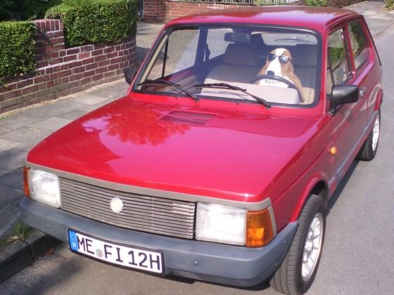 auch unser Basset steht auf Fiat